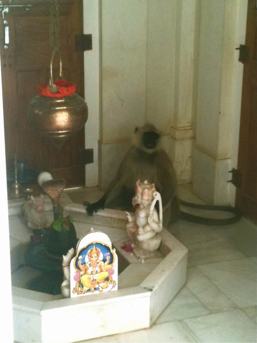 Samadhi of a monkey in Bari Khatu ashram