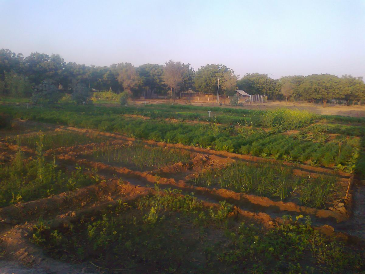 Jadan organic garden reports - for the late winter